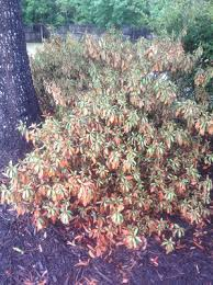 High Heat Plants Treat Drought Heat Stressed Plants Carefully