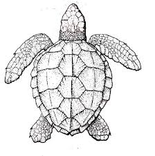 popular sea turtle coloring coloring 8654 unknown