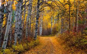wallpapers aspen tree leaves path forest dirt road autumn