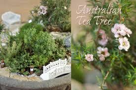 australian tea tree lush landscapes how to make miniature