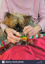 what to get an elderly woman for christmas elderly woman opening christmas presents with dog looking on