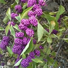 plants native to arkansas attracting birds u2014 hsv audubon
