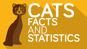 cats 18 interesting and funny cat facts you didn u0027t know youtube