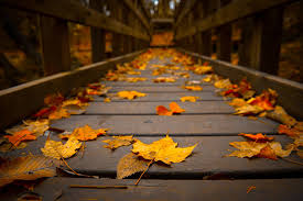 Cute Fall Wallpaper by Fall Wallpaper With Leaves 43 Free Fall With Leaves Wallpapers