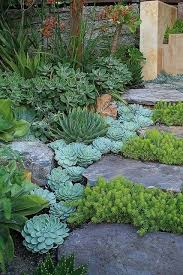Backyard Gardening Ideas With Pictures Best 25 Succulent Landscaping Ideas On Pinterest Succulent Rock