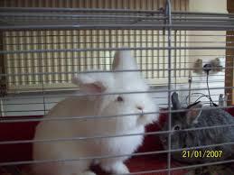 Large Rabbit Hutch Xl Rabbit Hutch Large Run Large Indoor Cage Leeds West