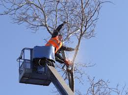 danbury tree pros tree service danbury ct tree service ct