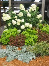 Flowering Shrubs For Partial Sun - proven winner plants u2014 big bloomers flower farm