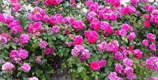 immagini di giardini fioriti aiuole come creare un giardino piacevole e armonico
