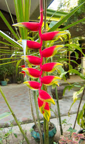 Flowers Plants by Philippine Shrubs Plants And Flowers U2013 Our Gallery
