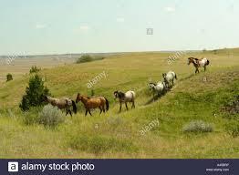 North Dakota scenery images Ajd57275 medora nd north dakota theodore roosevelt national jpg