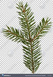 leaves0142 free background texture pine spruce leaf needles