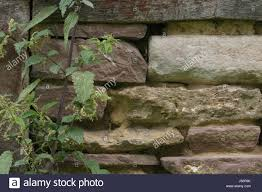 herb wall beam wall masonry green stuff house wall mortar stonewall herb