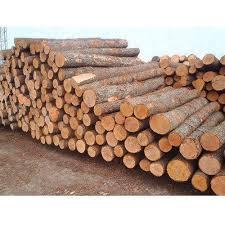timber wood log at rs 300 cubic wood log s n saw mill