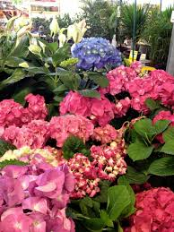 Flowers Home Decoration by Impressive 40 Magenta Garden Decoration Design Decoration Of Best