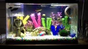 submersible led aquarium lights 10 gallon aquarium with marineland submersible led lighting youtube