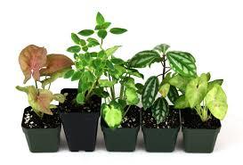 terrarium plant bundle 5 plants josh u0027s frogs