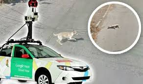 google images car google street car might have just killed a dog tech life style