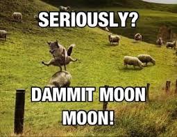 Moon Moon Meme - moon moon lawl pinterest moon wolf meme and meme