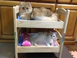 Bunk Bed For Dogs Clever Japanese Pet Owners Find Perfect Cat Beds U2026at Ikea Photos
