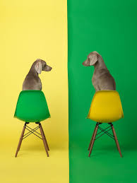 oddball dog art you just have to see stylish furniture gets the