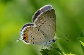 meandering thoughts blue butterfly