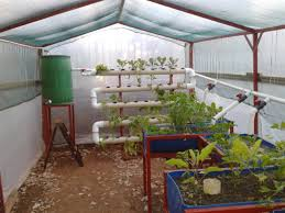 home aquaponics considerations for backyard systems photo with