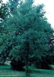 georgia native plants texas native plants database