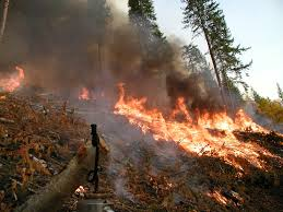 British Columbia Wildfire Service by Apex Forest Services