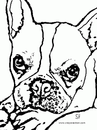 boston terrier coloring pages printable kids coloring