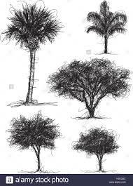 tree scribbles palm tree queen palm oak tree and other tree