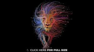 lion wallpapers photos and desktop backgrounds up 8k