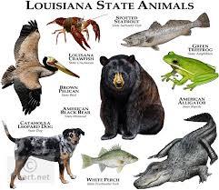Louisiana wild animals images Louisiana state animal louisiana state animals full color jpg