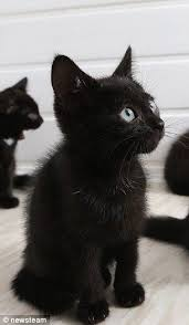 Barn Cat Names Meet The Cats No One Wants Just Because They Are Black Cat