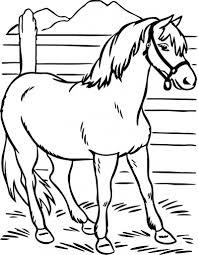 horse coloring pages preschool and kindergarten