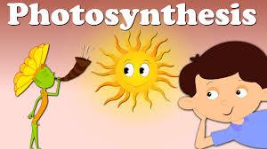 photosynthesis youtube