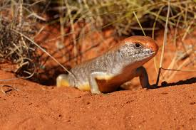 native plants of australia list australian wildlife conservancy