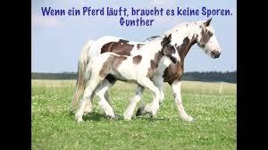 pferdesprüche die schönsten pferdesprüche