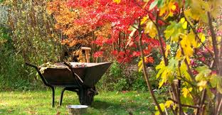 fall gardening tips my garden life