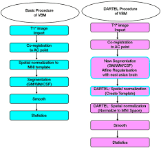 the procedures of image processing with basic and dartel vbm