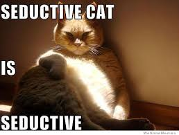 seductive cat is seductive books worth reading pinterest