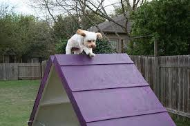Backyard Agility Course Diy Dog Agility A Frame 7 Steps With Pictures