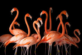 birds images Bird guide endangered species and why they matter jpg