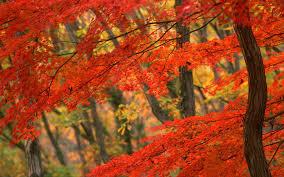 Beautiful Images Beautiful Blooming Trees 26 Photos Funmag Org