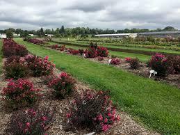 Garden Express Summer Catalogue - perennials walters gardens inc