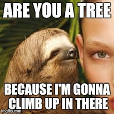 Sloth Whisper Meme - whisper sloth meme imgflip