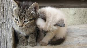 cat cats two pets adorable kind animals tiny small friends