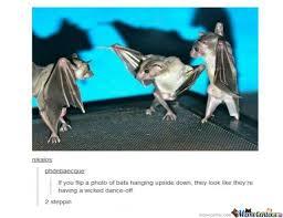 Bat Meme - bats dance battle by alya97 meme center
