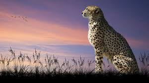 wildlife images Official website of un world wildlife day jpg