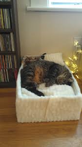 Cats In Dog Beds 13 Ikea Hacks Your Pets Will Appreciate Ikea Hack Cat And Kitty
